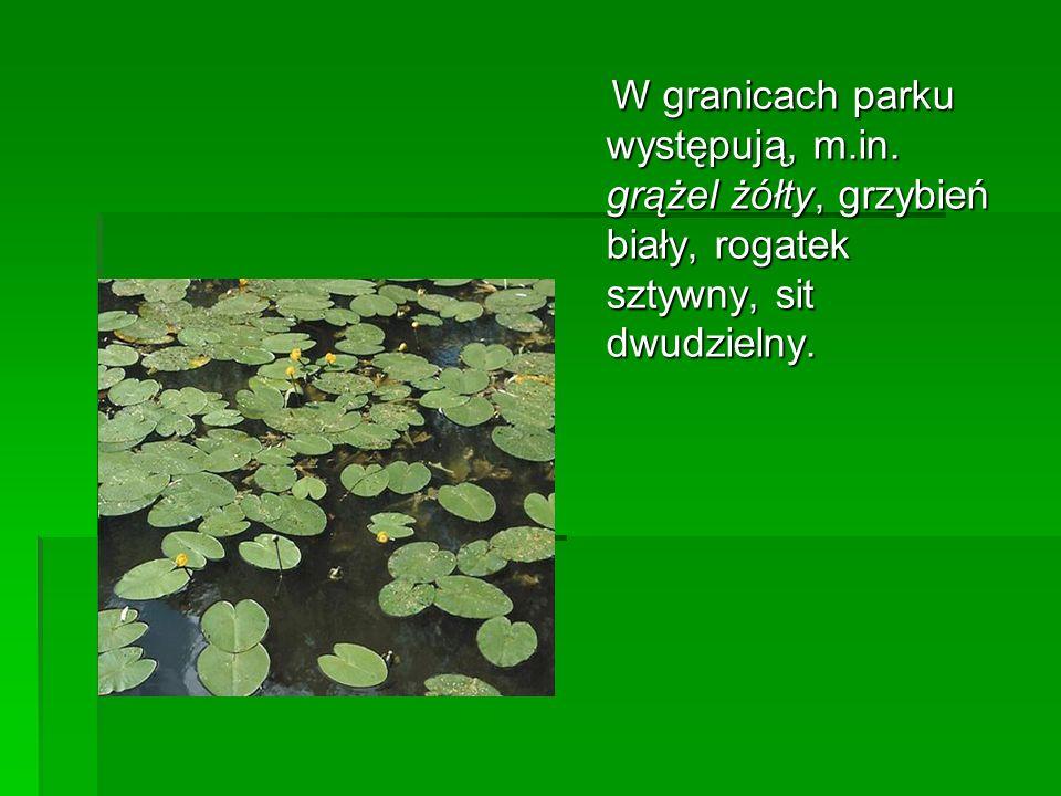 W granicach parku występują, m.in. grążel żółty, grzybień biały, rogatek sztywny, sit dwudzielny. W granicach parku występują, m.in. grążel żółty, grz