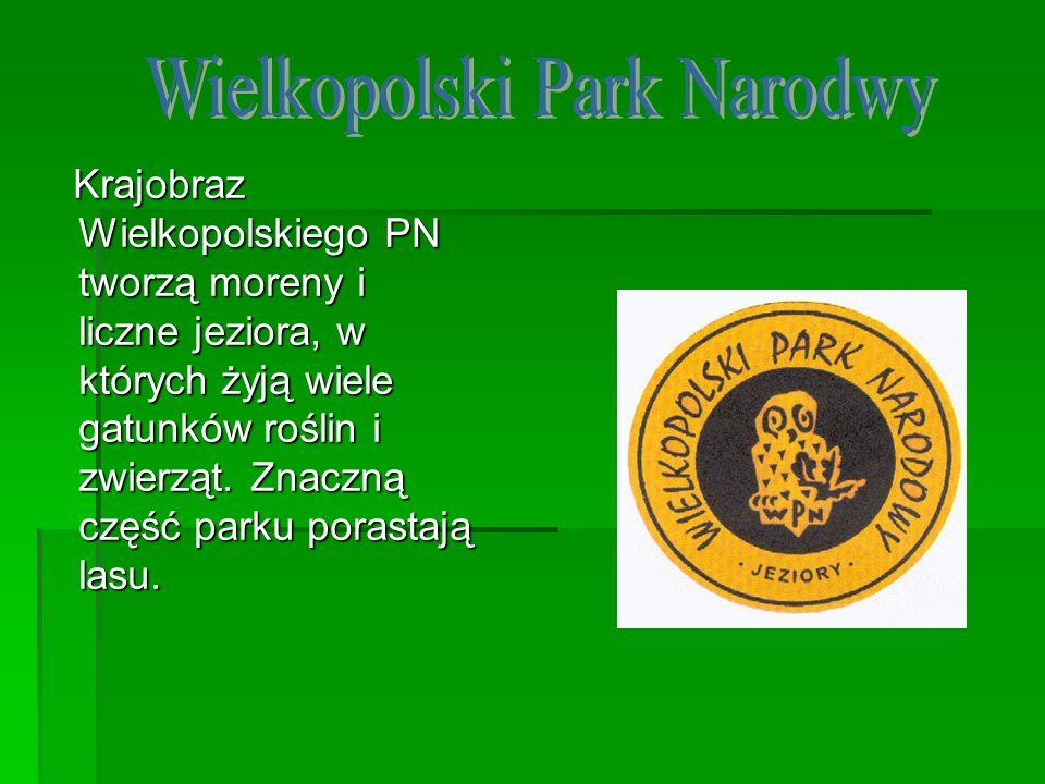 Krajobraz Wielkopolskiego PN tworzą moreny i liczne jeziora, w których żyją wiele gatunków roślin i zwierząt. Znaczną część parku porastają lasu. Kraj
