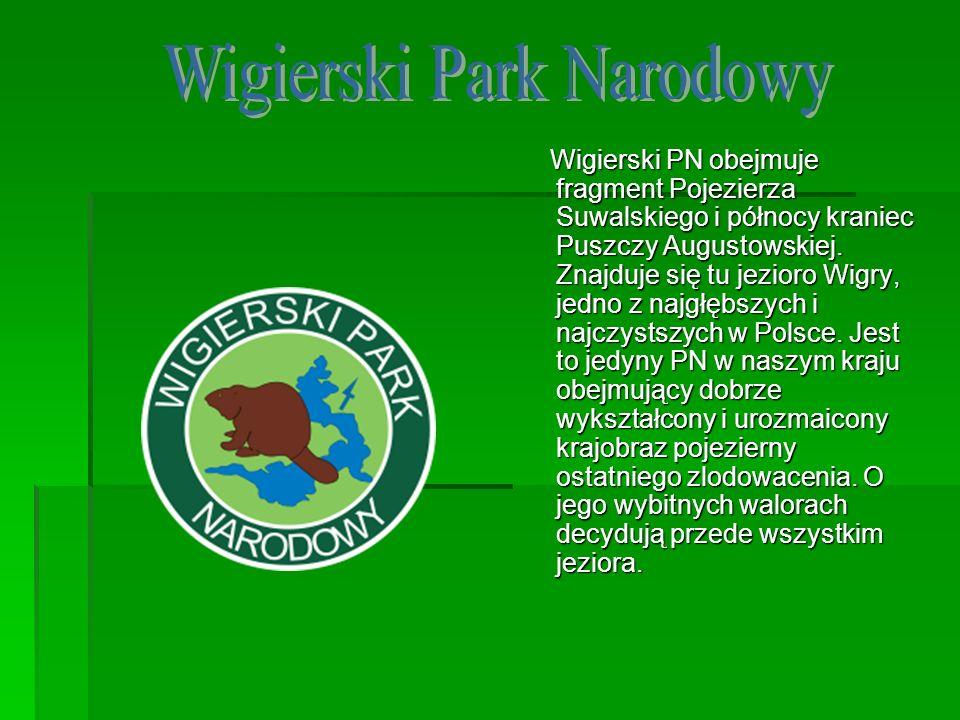 Wigierski PN obejmuje fragment Pojezierza Suwalskiego i północy kraniec Puszczy Augustowskiej. Znajduje się tu jezioro Wigry, jedno z najgłębszych i n