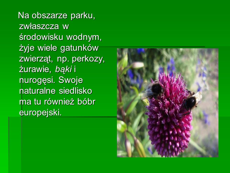 Na obszarze parku, zwłaszcza w środowisku wodnym, żyje wiele gatunków zwierząt, np. perkozy, żurawie, bąki i nurogęsi. Swoje naturalne siedlisko ma tu