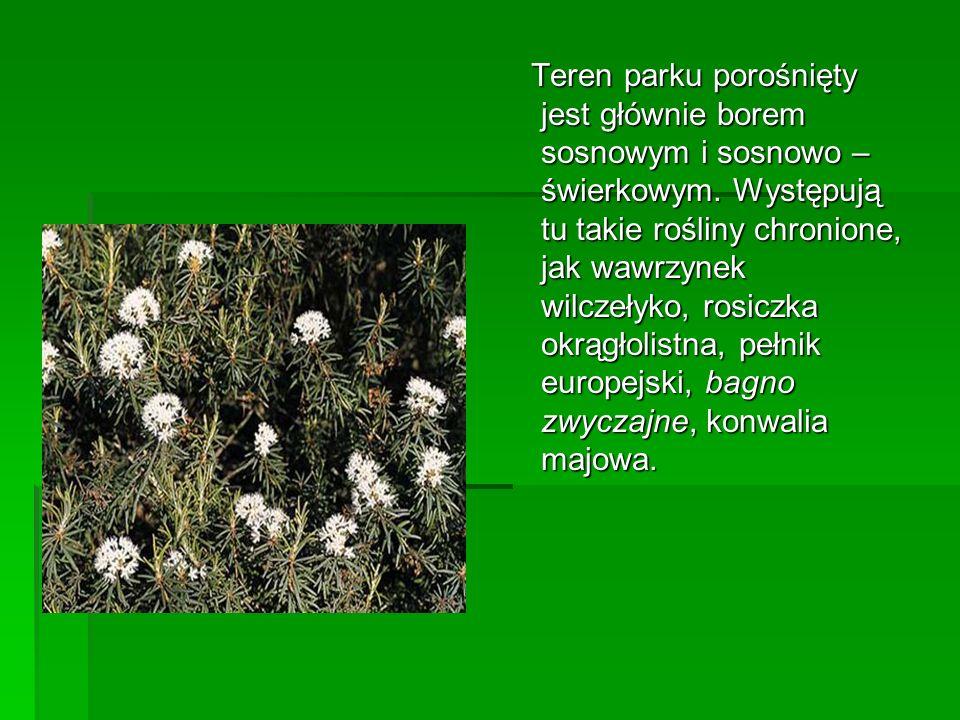 Teren parku porośnięty jest głównie borem sosnowym i sosnowo – świerkowym. Występują tu takie rośliny chronione, jak wawrzynek wilczełyko, rosiczka ok