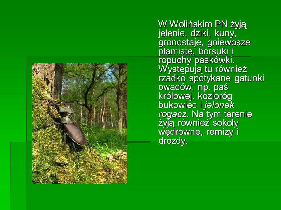 W Wolińskim PN żyją jelenie, dziki, kuny, gronostaje, gniewosze plamiste, borsuki i ropuchy paskówki. Występują tu również rzadko spotykane gatunki ow