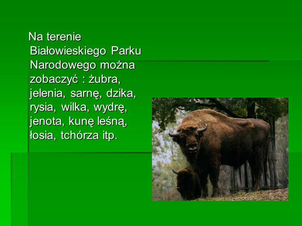 Najważniejszym elementem krajobrazu Roztoczańskiego Parku Narodowego są lasy.