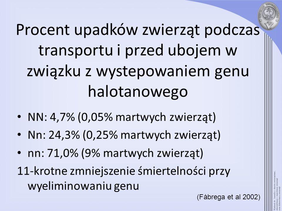 Procent upadków zwierząt podczas transportu i przed ubojem w związku z wystepowaniem genu halotanowego NN: 4,7% (0,05% martwych zwierząt) Nn: 24,3% (0