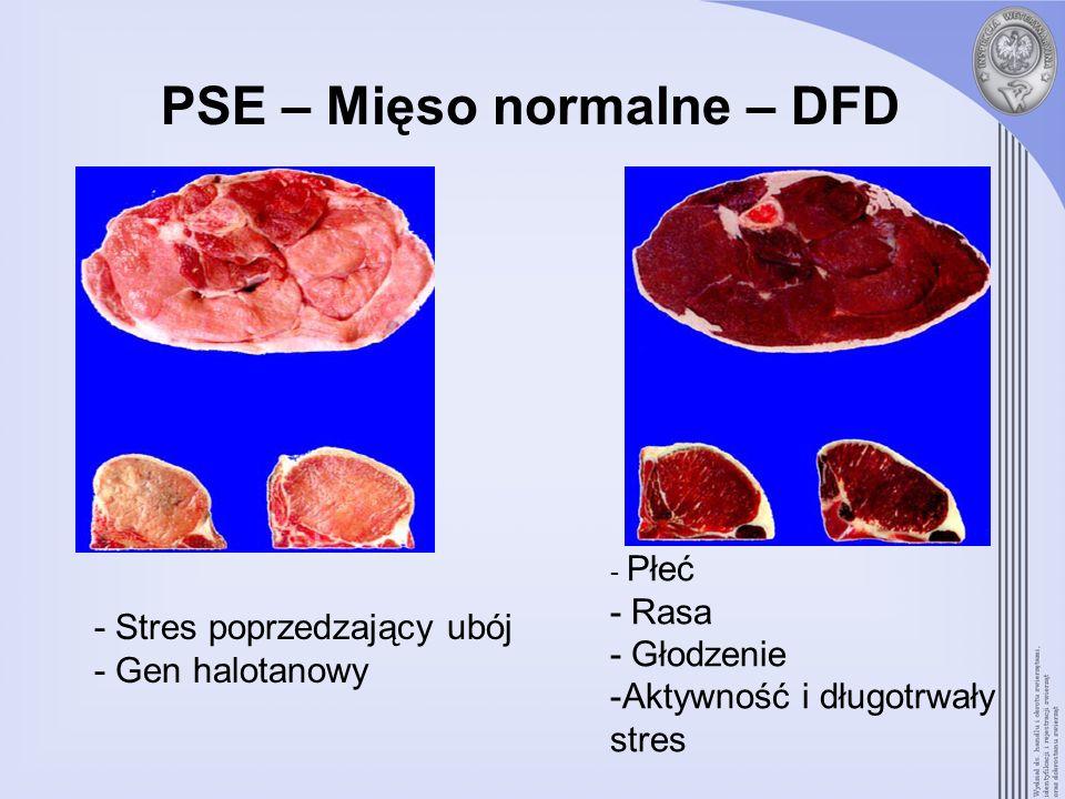 PSE – Mięso normalne – DFD - Stres poprzedzający ubój - Gen halotanowy - Płeć - Rasa - Głodzenie -Aktywność i długotrwały stres