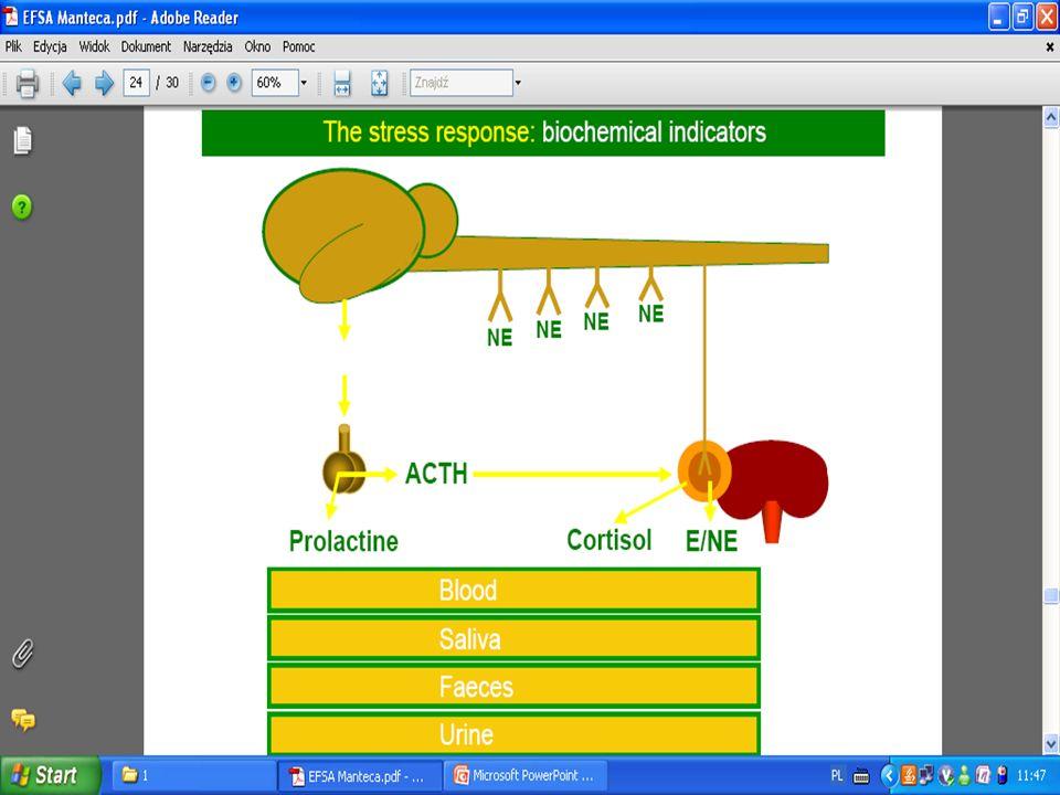 24. slajd z oryginalnej prezentacji