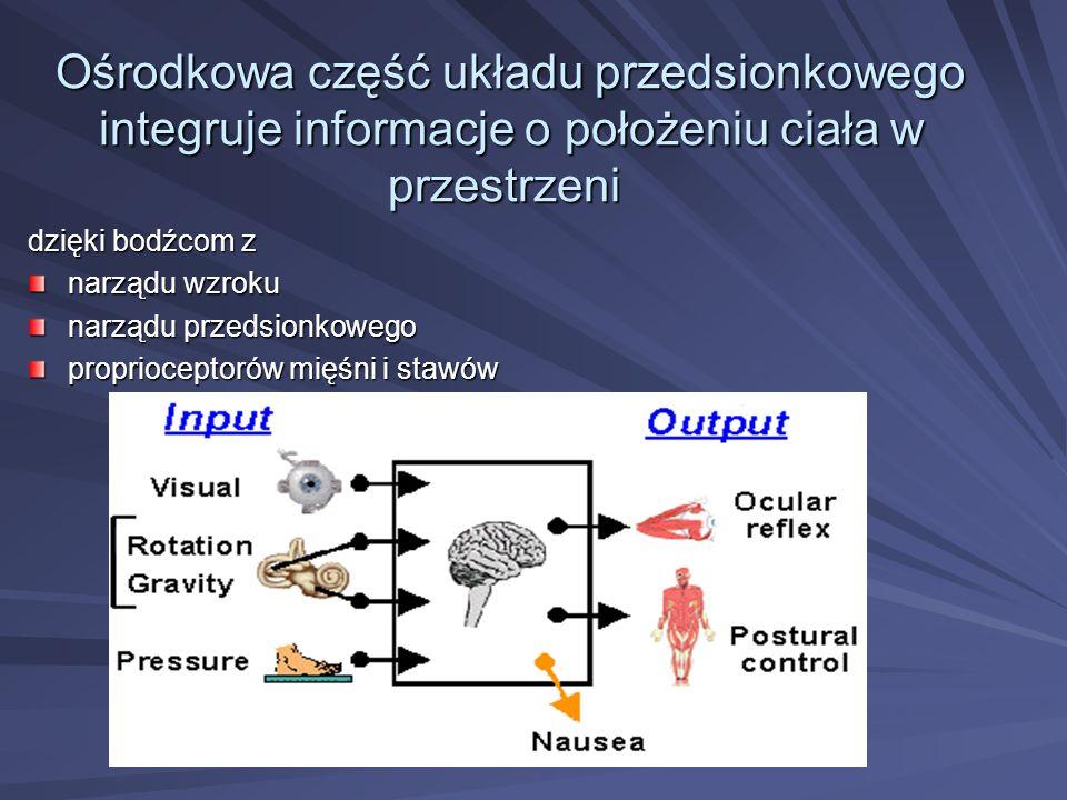 Ośrodkowa część układu przedsionkowego integruje informacje o położeniu ciała w przestrzeni Ośrodkowa część układu przedsionkowego integruje informacj