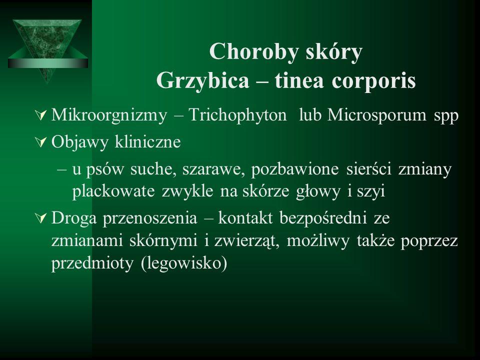 Choroby skóry Grzybica – tinea corporis Mikroorgnizmy – Trichophyton lub Microsporum spp Objawy kliniczne –u psów suche, szarawe, pozbawione sierści z