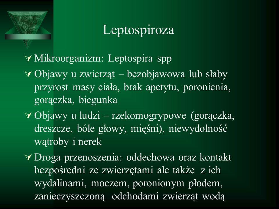 Leptospiroza Mikroorganizm: Leptospira spp Objawy u zwierząt – bezobjawowa lub słaby przyrost masy ciała, brak apetytu, poronienia, gorączka, biegunka