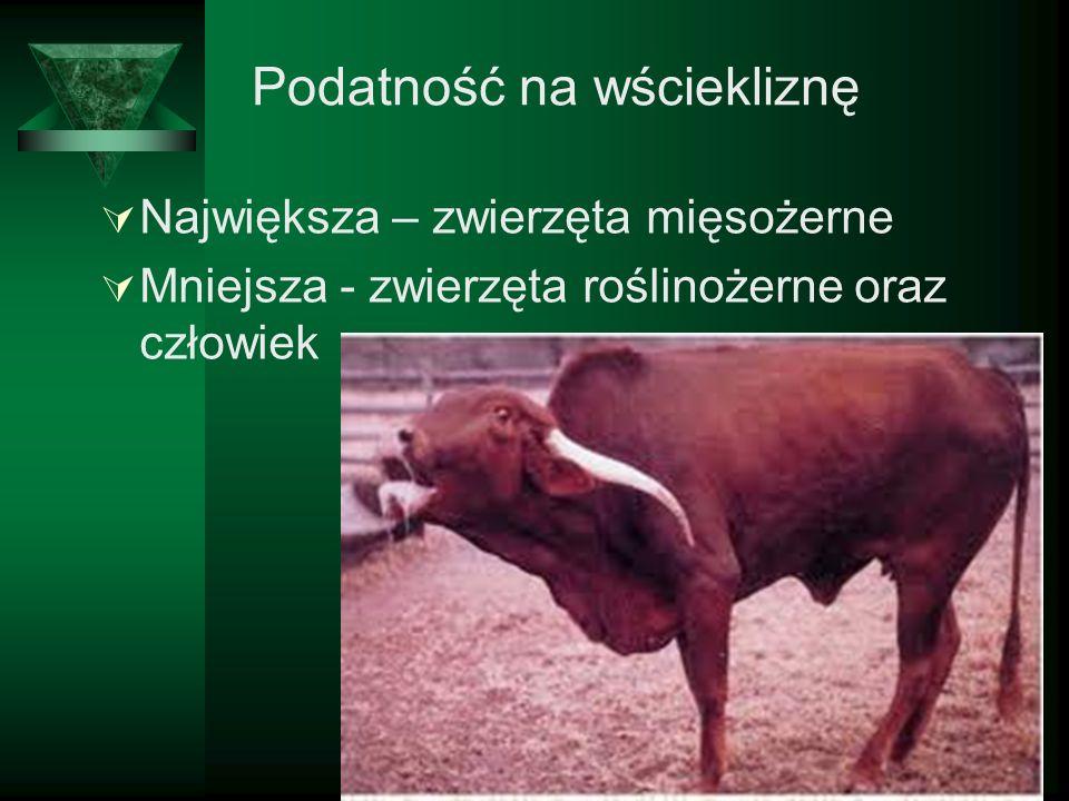 Podatność na wściekliznę Największa – zwierzęta mięsożerne Mniejsza - zwierzęta roślinożerne oraz człowiek