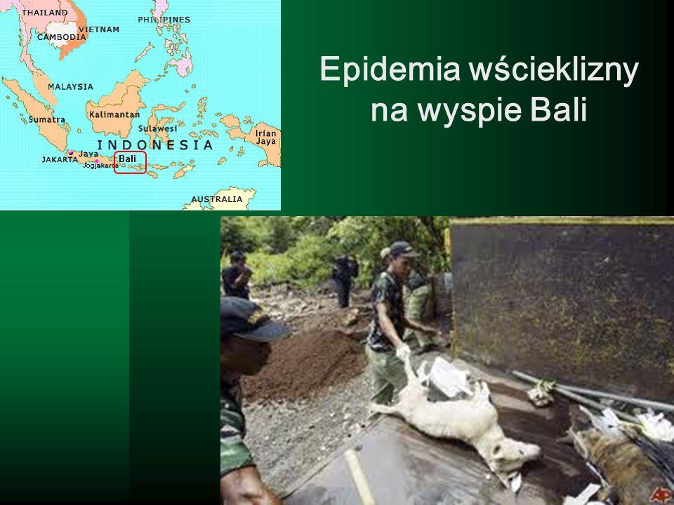 Epidemia wścieklizny na wyspie Bali