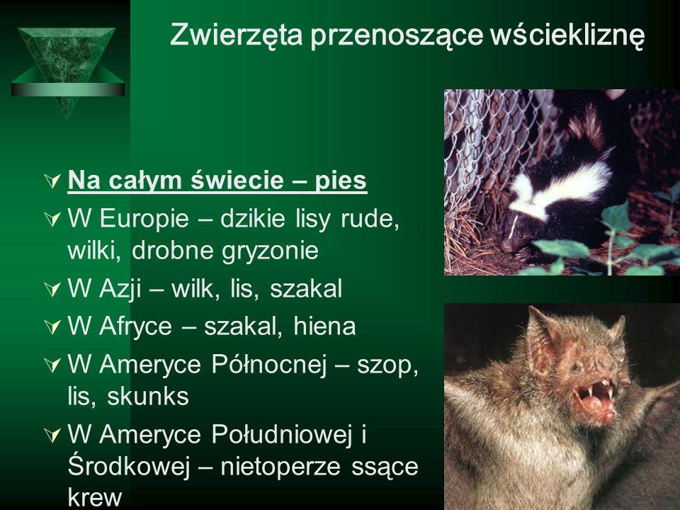 Zwierzęta przenoszące wściekliznę Na całym świecie – pies W Europie – dzikie lisy rude, wilki, drobne gryzonie W Azji – wilk, lis, szakal W Afryce – s