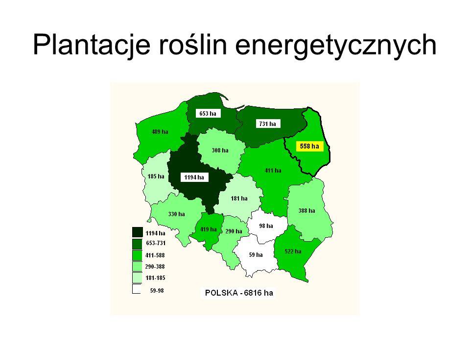 Plantacje roślin energetycznych