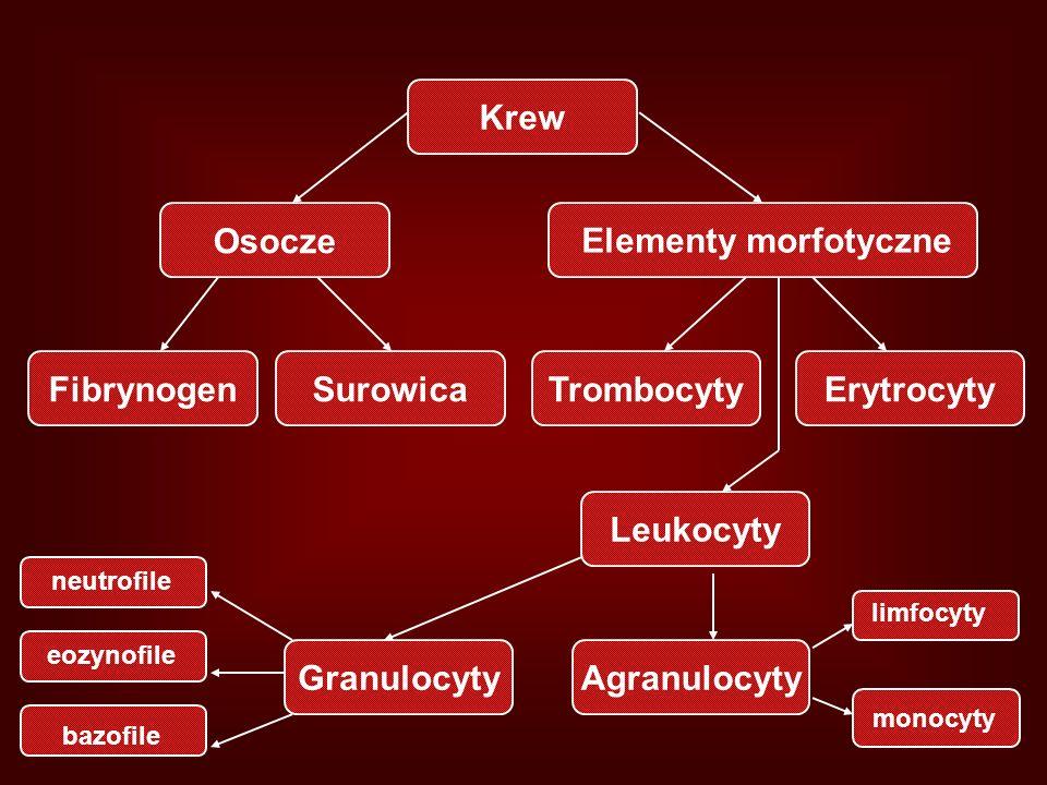 Krew ErytrocytySurowicaTrombocyty Osocze Fibrynogen Leukocyty AgranulocytyGranulocyty Elementy morfotyczne limfocyty neutrofile eozynofile bazofile mo