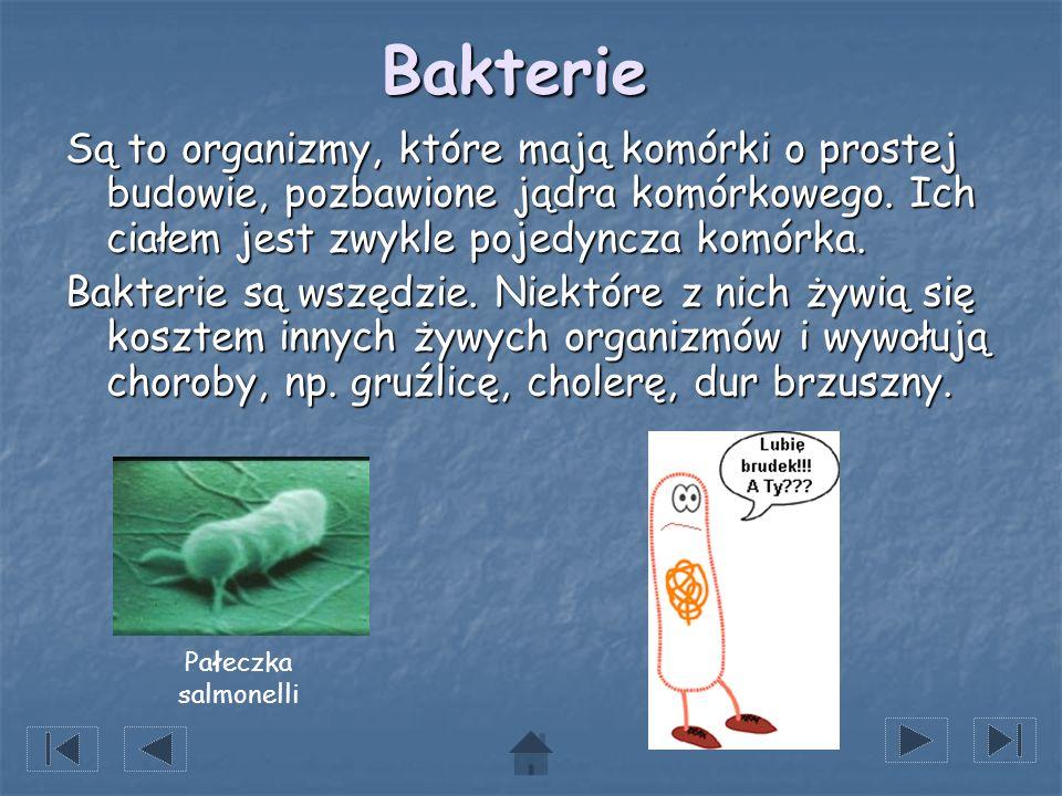 Bakterie Są to organizmy, które mają komórki o prostej budowie, pozbawione jądra komórkowego. Ich ciałem jest zwykle pojedyncza komórka. Bakterie są w