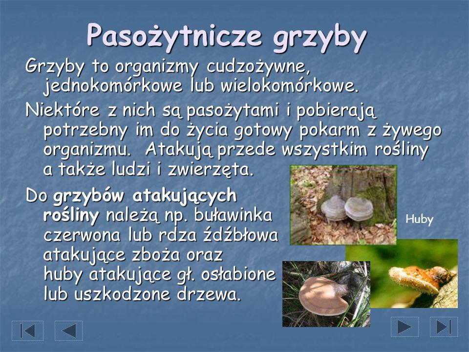 Pasożytnicze grzyby Grzyby to organizmy cudzożywne, jednokomórkowe lub wielokomórkowe. Niektóre z nich są pasożytami i pobierają potrzebny im do życia