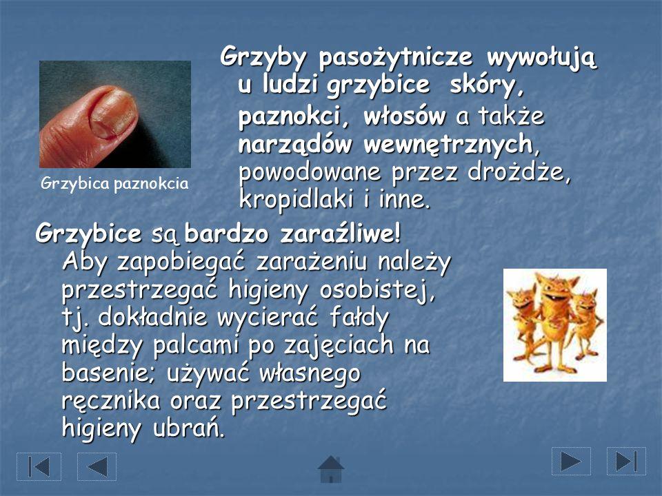 Grzyby pasożytnicze wywołują u ludzi grzybice skóry, paznokci, włosów a także narządów wewnętrznych, powodowane przez drożdże, kropidlaki i inne. Grzy