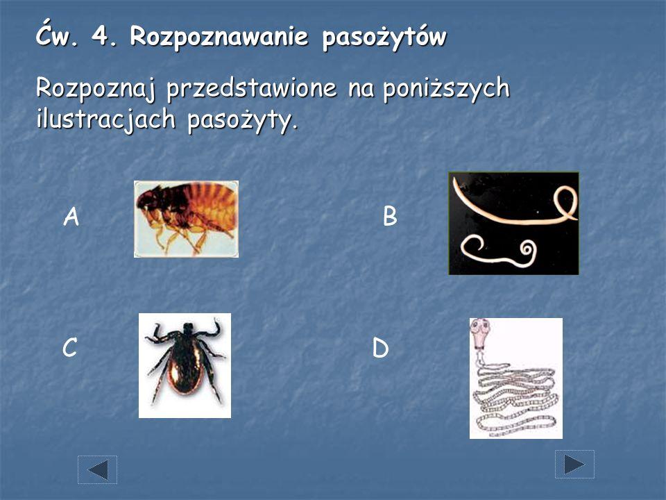 D A C B Ćw. 4. Rozpoznawanie pasożytów Rozpoznaj przedstawione na poniższych ilustracjach pasożyty.