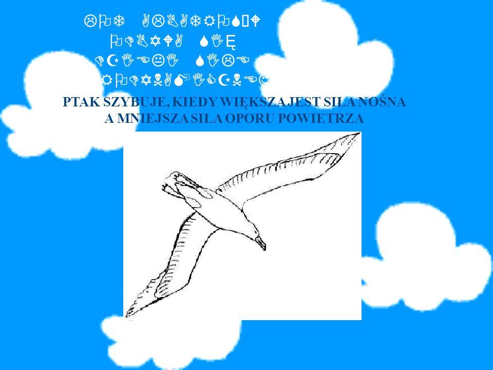 ALBATROS krępe ciało dłgości71-135cm dŁugie wąskie skrzydŁa o rozpiętości 350cm i więcej masywny dziób, zakończony haczykowato ubarwione biało z domie