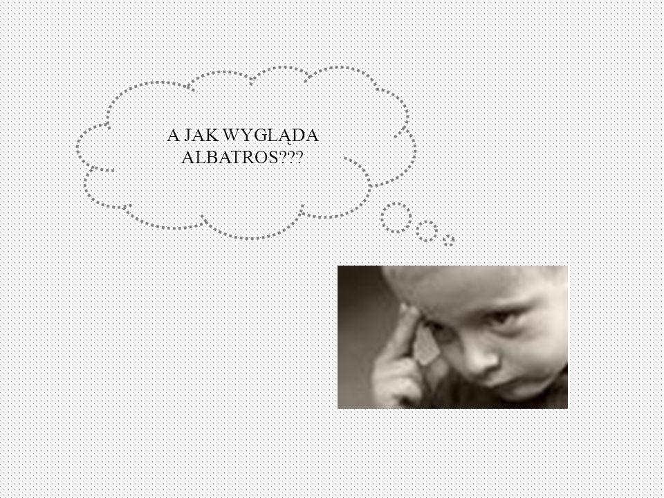A JAK WYGLĄDA ALBATROS???
