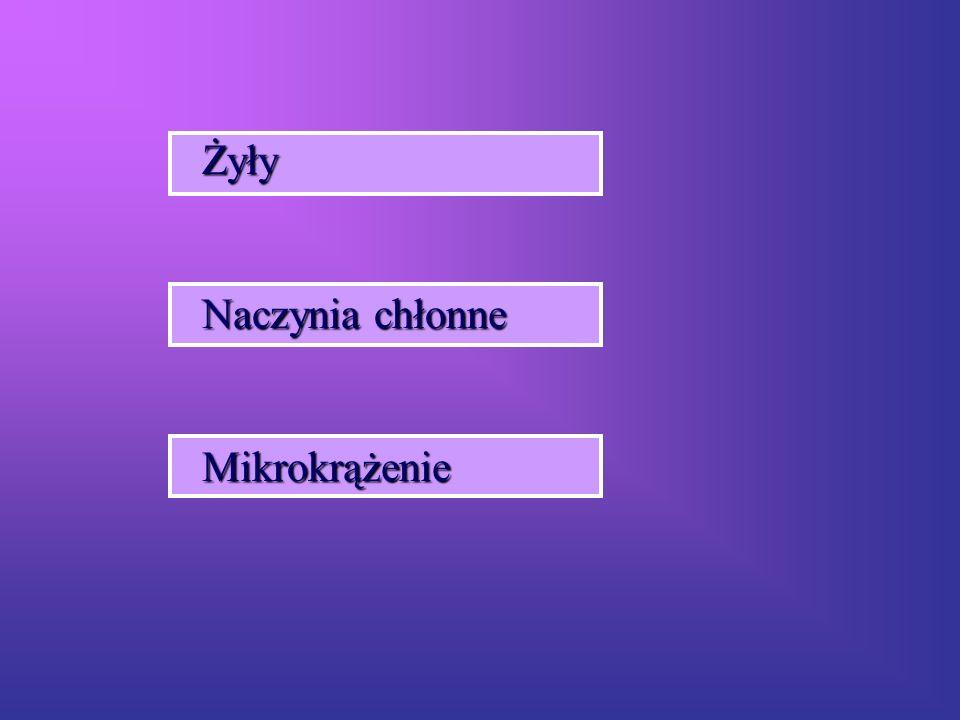 Żyły Naczynia chłonne Mikrokrążenie