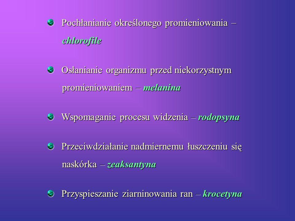 Pochłanianie określonego promieniowania – Pochłanianie określonego promieniowania – chlorofile chlorofile Osłanianie organizmu przed niekorzystnym Osł