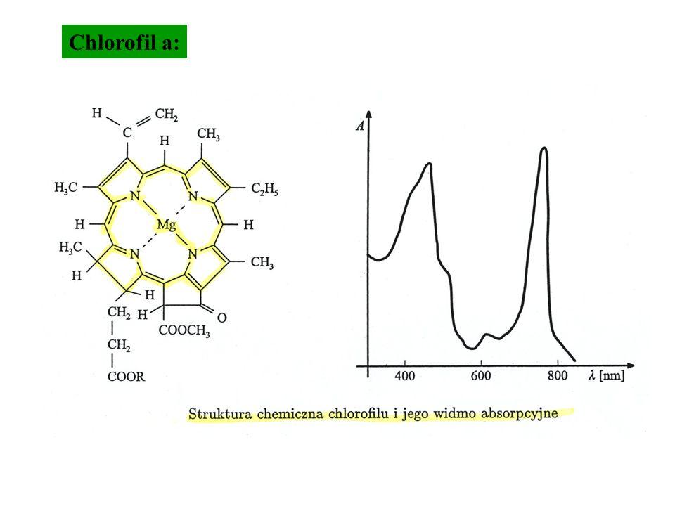 Chlorofil a: