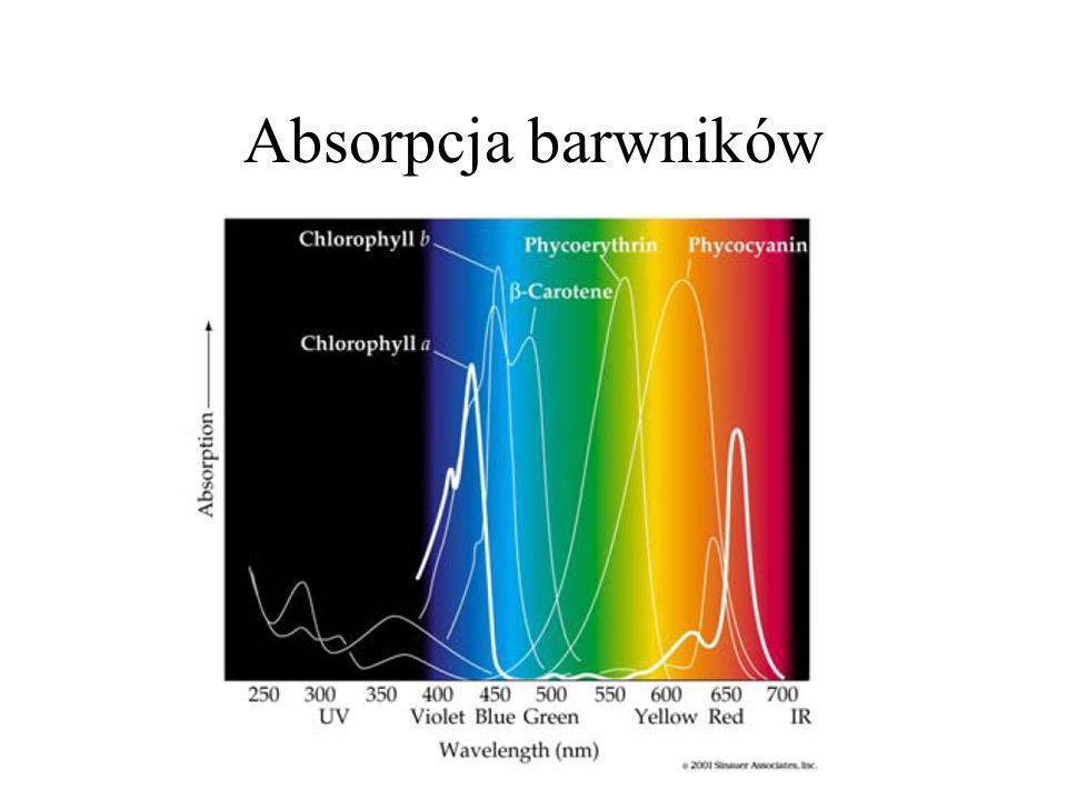 Absorpcja barwników