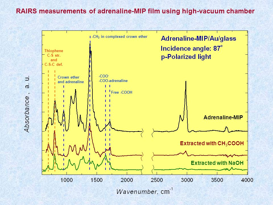 RAIRS measurements of adrenaline-MIP film using high-vacuum chamber Adrenaline-MIP Extracted with CH 3 COOH Extracted with NaOH Thiophene C-S str. and