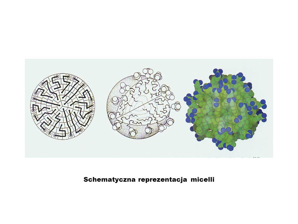 Schematyczna reprezentacja micelli