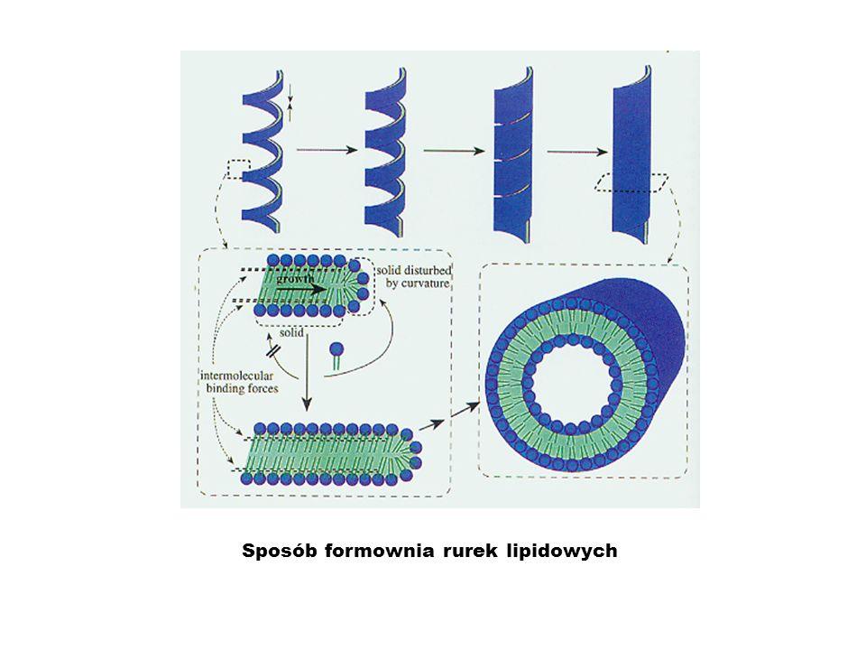 Sposób formownia rurek lipidowych