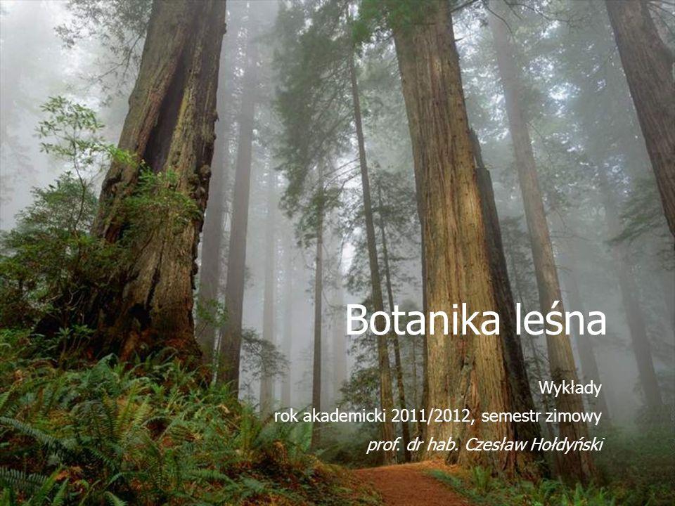 Botanika leśna Wykłady rok akademicki 2011/2012, semestr zimowy prof. dr hab. Czesław Hołdyński