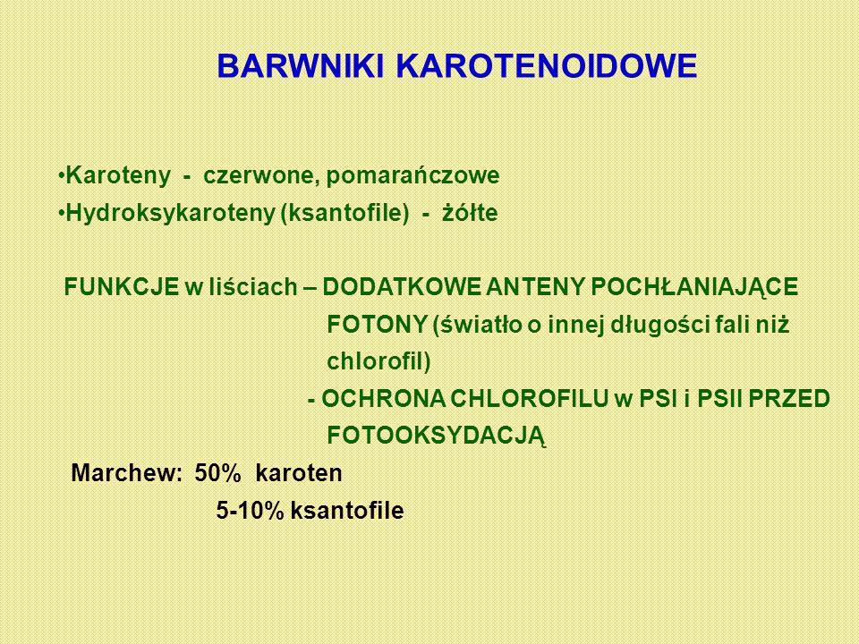 BARWNIKI KAROTENOIDOWE Karoteny - czerwone, pomarańczowe Hydroksykaroteny (ksantofile) - żółte FUNKCJE w liściach – DODATKOWE ANTENY POCHŁANIAJĄCE FOT
