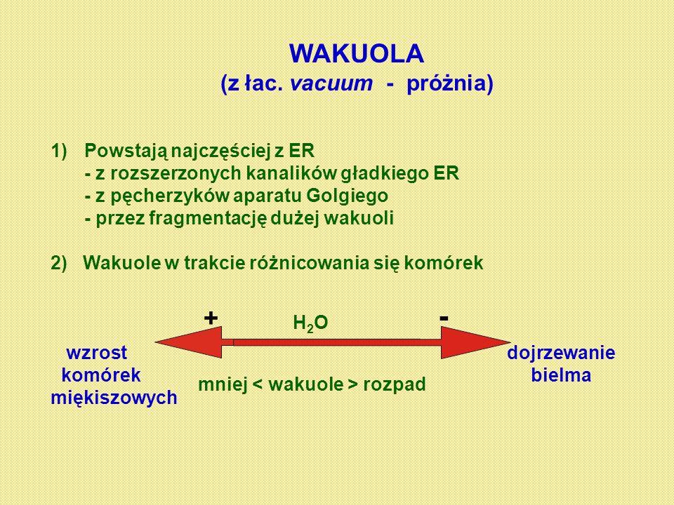 WAKUOLA (z łac. vacuum - próżnia) 1)Powstają najczęściej z ER - z rozszerzonych kanalików gładkiego ER - z pęcherzyków aparatu Golgiego - przez fragme