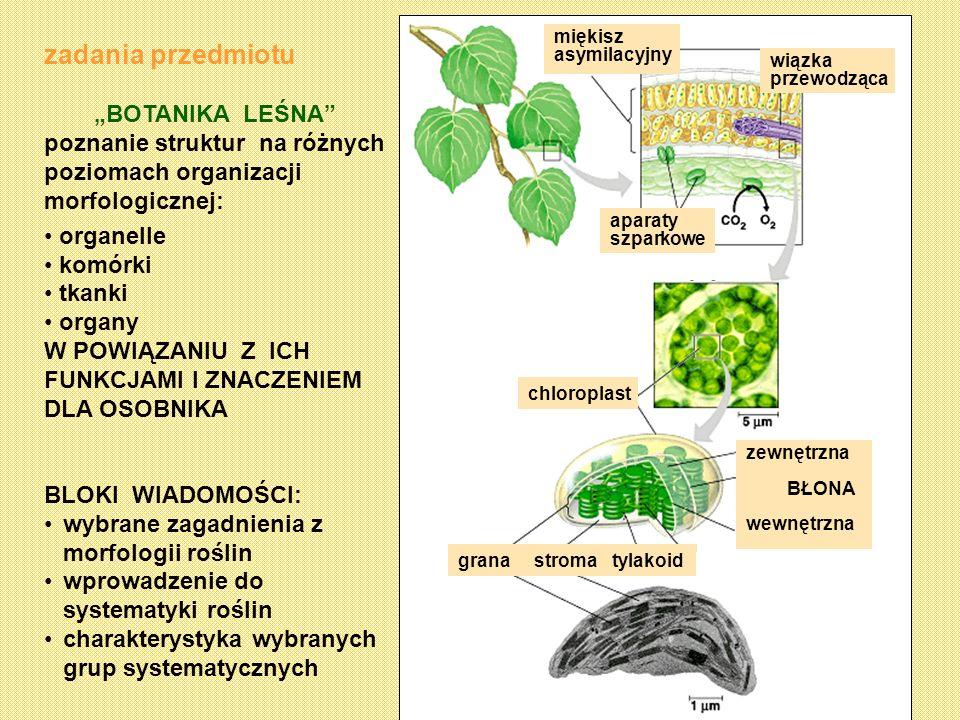 zadania przedmiotu BOTANIKA LEŚNA poznanie struktur na różnych poziomach organizacji morfologicznej: organelle komórki tkanki organy W POWIĄZANIU Z IC