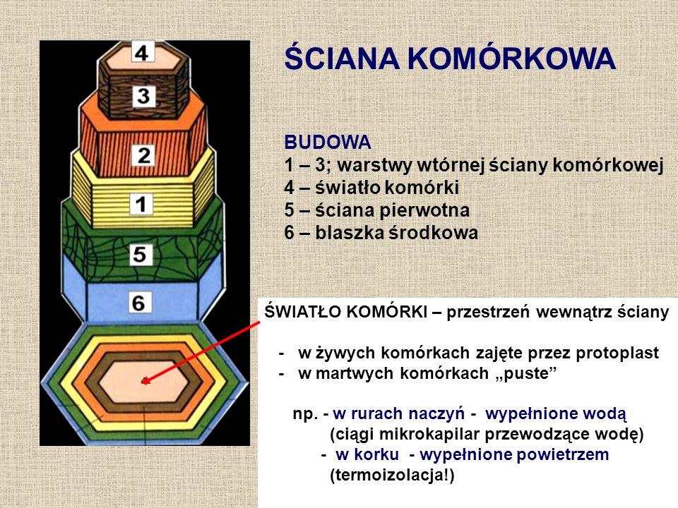 Modyfikacje ściany komórkowej SUBSTANCJE INKRUSTUJĄCE: –lignina (drzewnik); –suberyna (w niektórych tkankach); –garbniki; –olejki eteryczne; –żywice; –sole mineralne (CaCO 3, SiO 2 ); SUBSTANCJE ADKRUSTUJĄCE: –kutyna; –woski; –suberyna; –sporopolenina; –związki hydrofilne: śluzy, gumy, kaloza.