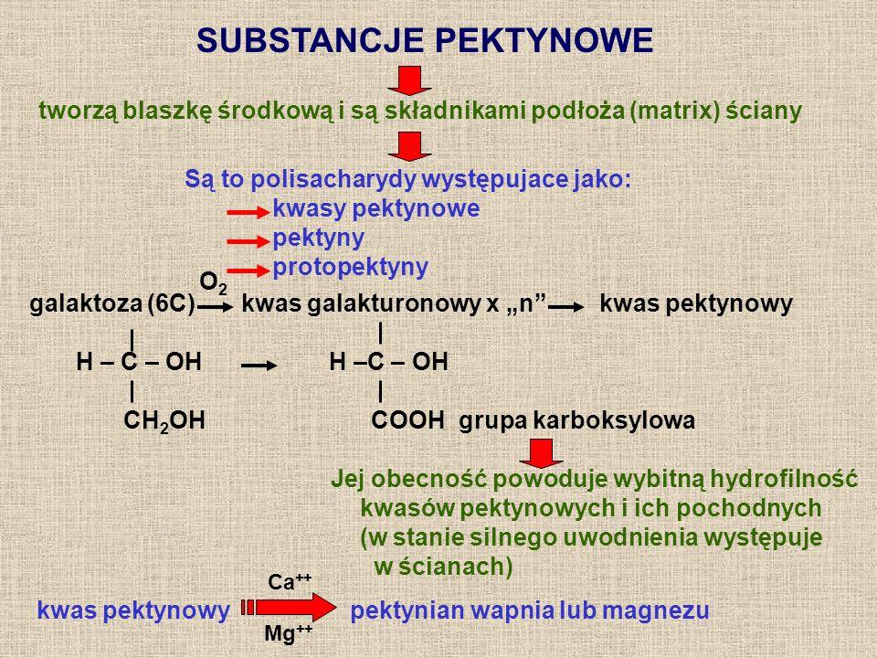 SUBSTANCJE PEKTYNOWE Są to polisacharydy występujace jako: kwasy pektynowe pektyny protopektyny galaktoza (6C) kwas galakturonowy x n kwas pektynowy H