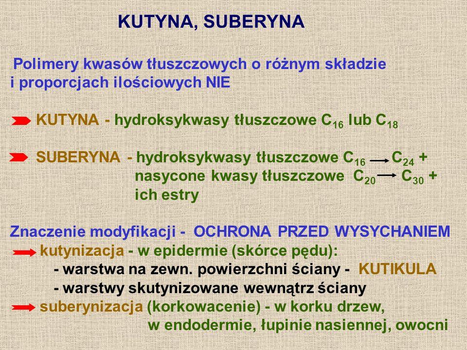 KUTYNA, SUBERYNA Polimery kwasów tłuszczowych o różnym składzie i proporcjach ilościowych NIE KUTYNA - hydroksykwasy tłuszczowe C 16 lub C 18 SUBERYNA
