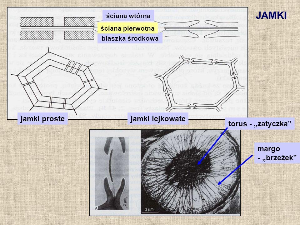 JAMKI jamki prostejamki lejkowate torus - zatyczka margo - brzeżek ściana wtórna blaszka środkowa ściana pierwotna