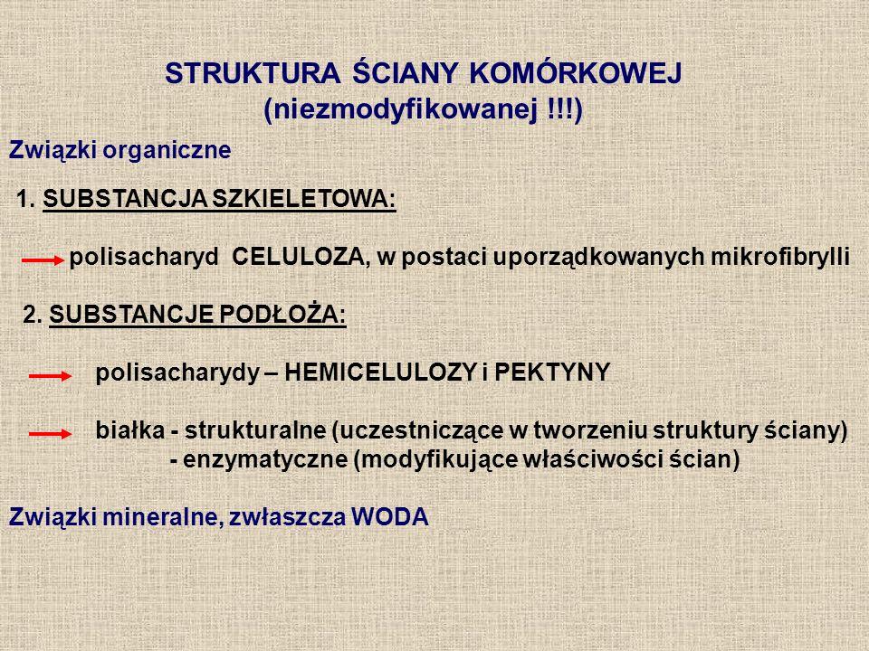 STRUKTURA ŚCIANY KOMÓRKOWEJ (niezmodyfikowanej !!!) Związki organiczne 1. SUBSTANCJA SZKIELETOWA: polisacharyd CELULOZA, w postaci uporządkowanych mik