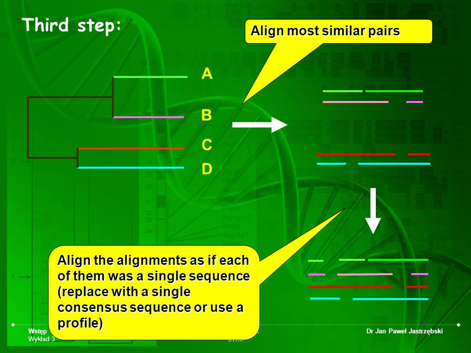 Wstęp do bioinformatyki Wykład 3 Biotechnologia UWM Dr Jan Paweł Jastrzębski A D C B Align most similar pairs Align the alignments as if each of them