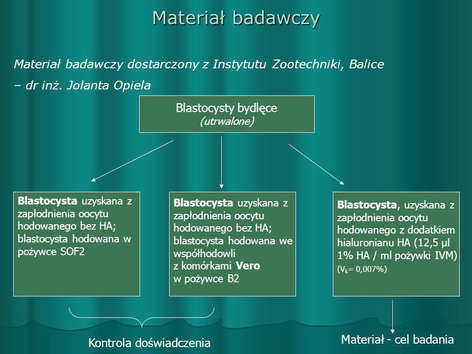 Materiał badawczy Materiał badawczy dostarczony z Instytutu Zootechniki, Balice – dr inż. Jolanta Opiela Blastocysty bydlęce (utrwalone) Blastocysta u