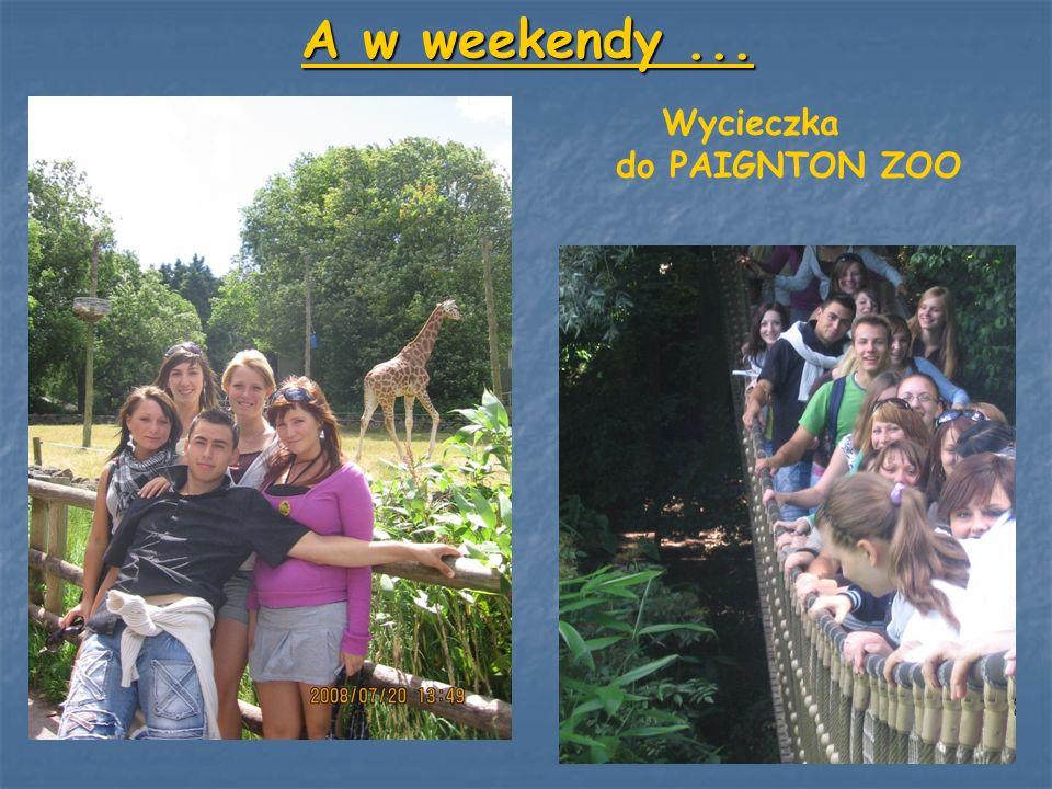 A w weekendy... Wycieczka do PAIGNTON ZOO