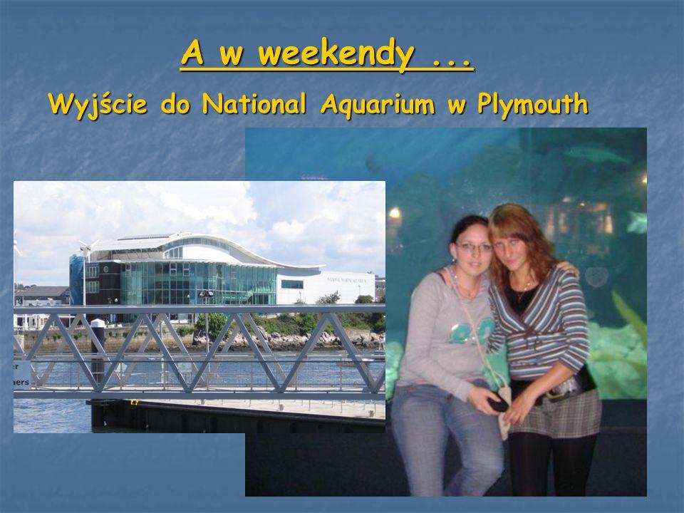 A w weekendy... Wyjście do National Aquarium w Plymouth