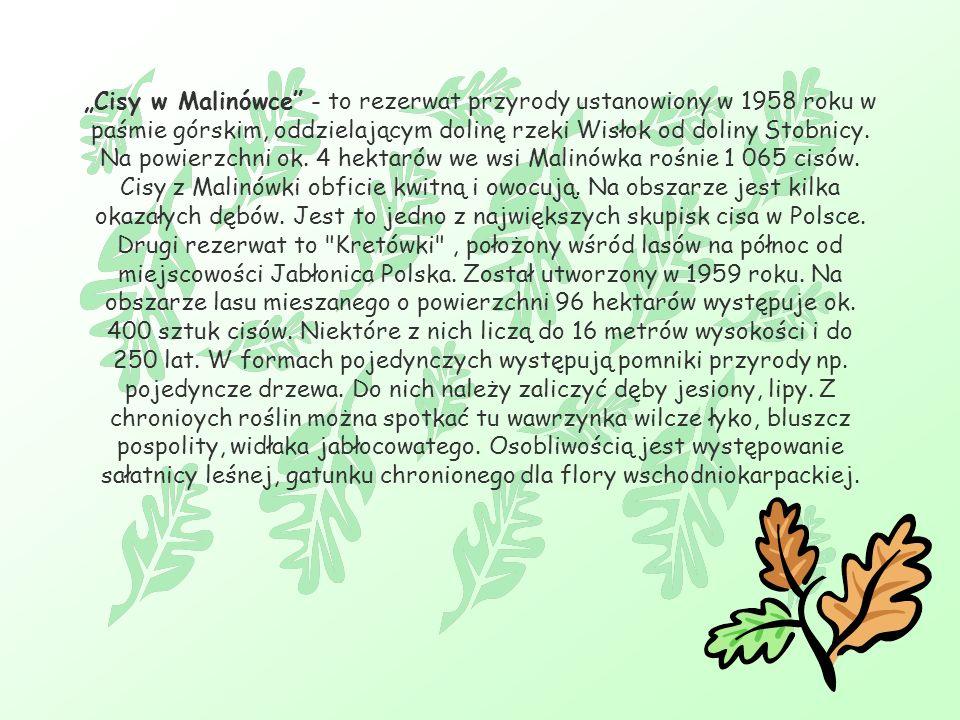 Cisy w Malinówce - to rezerwat przyrody ustanowiony w 1958 roku w paśmie górskim, oddzielającym dolinę rzeki Wisłok od doliny Stobnicy.