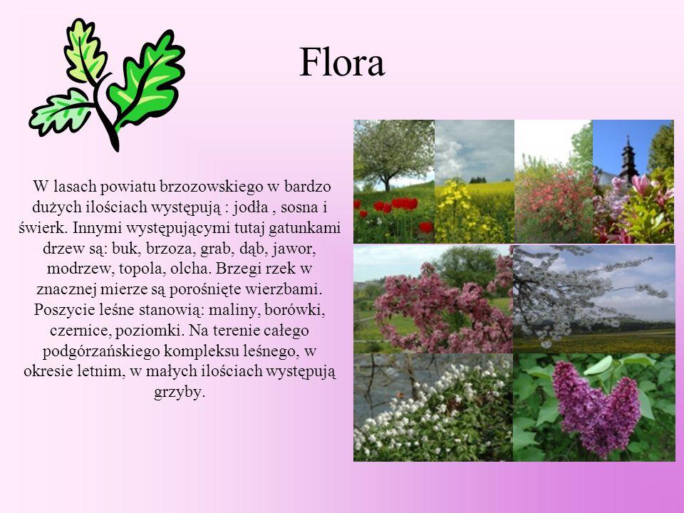 Flora W lasach powiatu brzozowskiego w bardzo dużych ilościach występują : jodła, sosna i świerk.