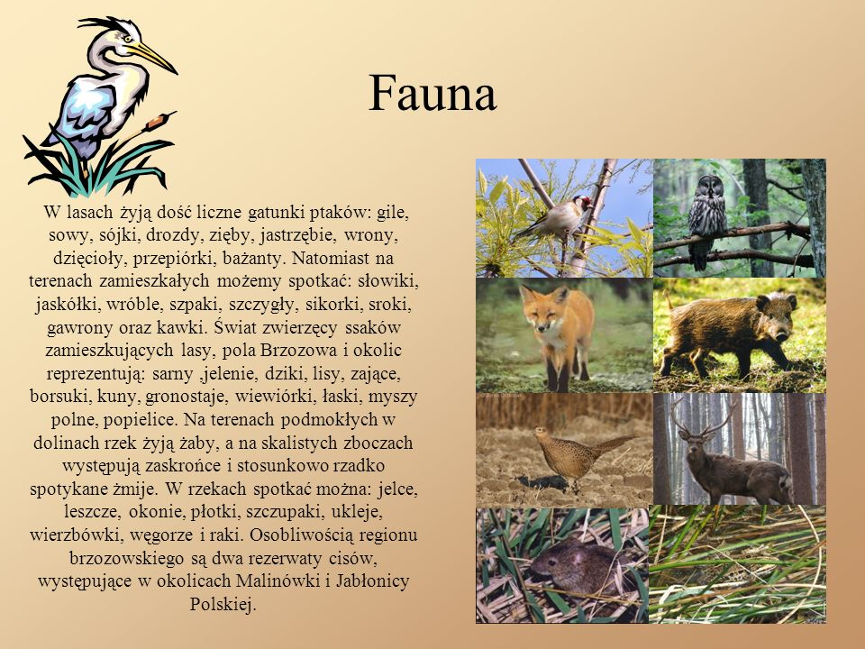 Fauna W lasach żyją dość liczne gatunki ptaków: gile, sowy, sójki, drozdy, zięby, jastrzębie, wrony, dzięcioły, przepiórki, bażanty.