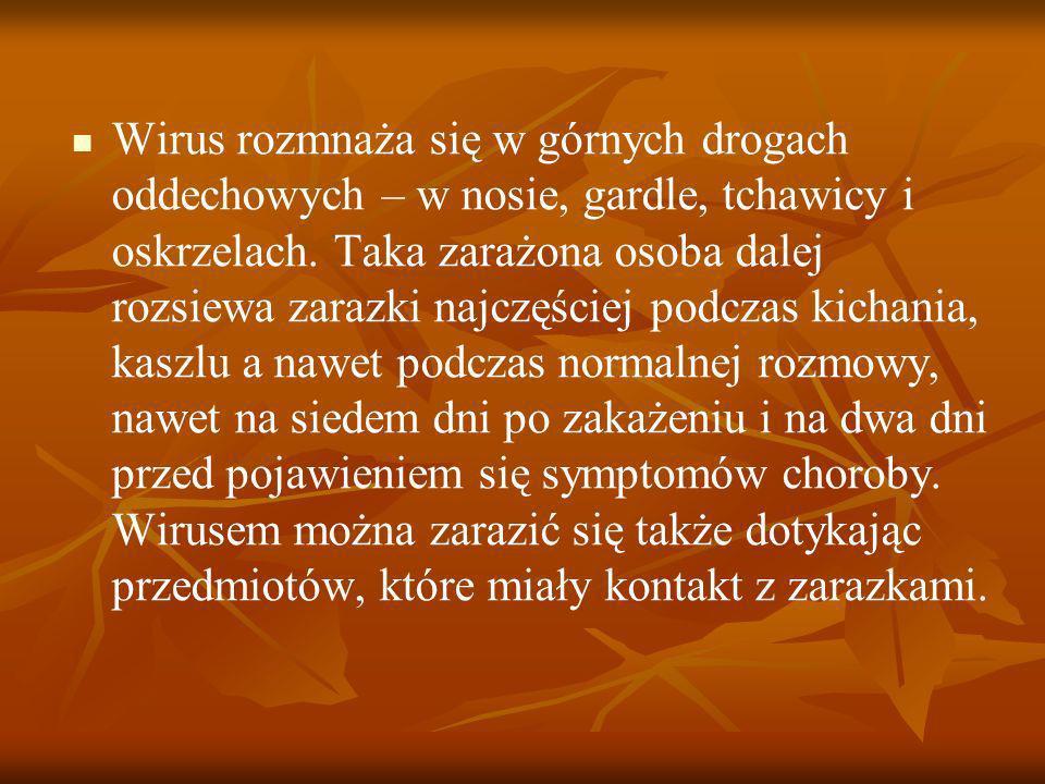 Wirus rozmnaża się w górnych drogach oddechowych – w nosie, gardle, tchawicy i oskrzelach. Taka zarażona osoba dalej rozsiewa zarazki najczęściej podc