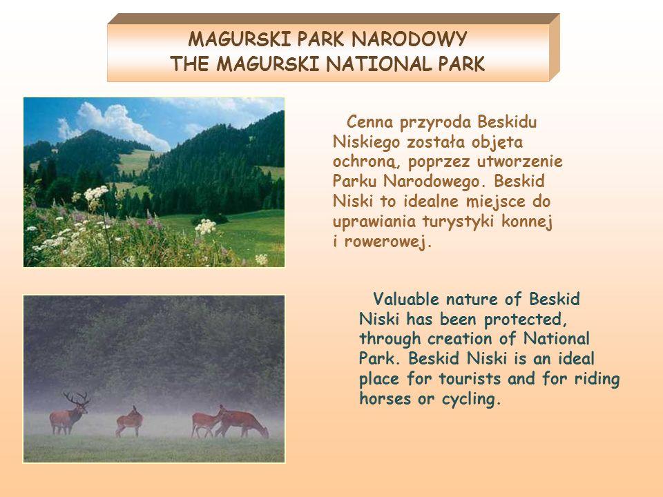 MAGURSKI PARK NARODOWY THE MAGURSKI NATIONAL PARK Cenna przyroda Beskidu Niskiego została objęta ochroną, poprzez utworzenie Parku Narodowego. Beskid