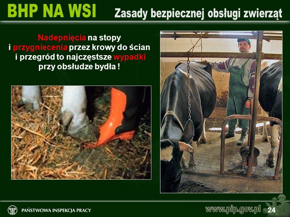 24 Nadepnięcia na stopy i przygniecenia przez krowy do ścian i przegród to najczęstsze wypadki przy obsłudze bydła !